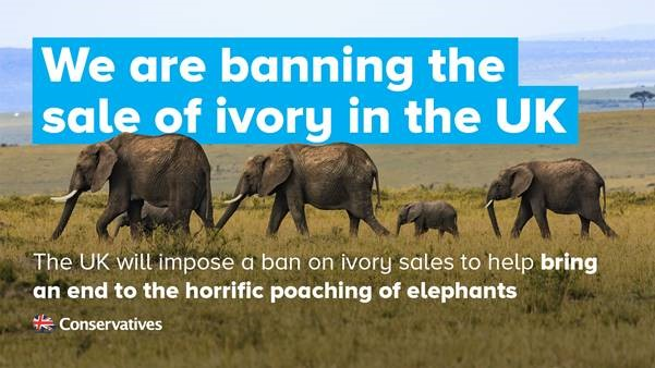 Trudy Supports Ivory Sale Ban Trudy Harrison
